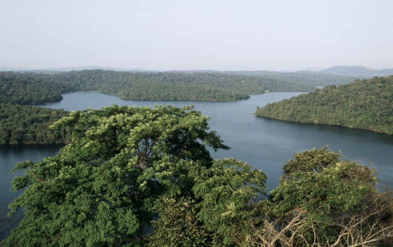 Rio Doce State Park Atlantic Rainforest Minas Gerais, Brazil