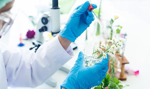 Profissional testando essência em flores